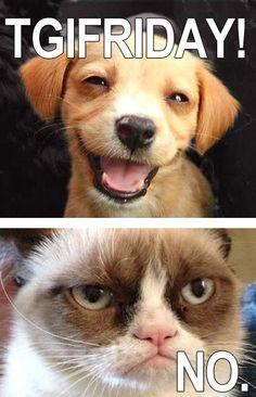 friday-grumpy-cat-meme-02